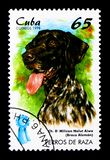 German Pointer (Canis lupus familiaris), Dogs serie, circa 1998. MOSCOW, RUSSIA - MARCH 28, 2018: A stamp printed in Cuba shows German Pointer (Canis lupus royalty free stock images