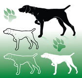 German pointer dog Stock Photo