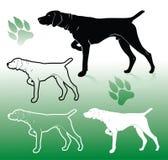 German pointer dog. Vector illustration of german pointer dog Stock Photo
