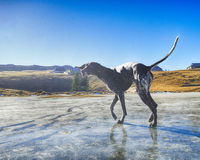 German pointer playing on ice Royalty Free Stock Images