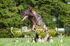 German Sheepdog Stock Photos