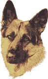 German Shepard portrait Royalty Free Stock Photography