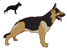 German Sheperd. Illustration of a standing German Sheperd Royalty Free Stock Image