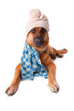 German shephaed dog wearing hat and scarf
