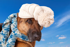 German shephard dog wearing hat and scarf. German shepherd dog wearing winter hat and scarf with blue sky background Royalty Free Stock Photo