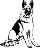 German Shepherd. Black and white portrait of a german shepherd dog royalty free illustration