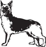 German Shepherd. Line Art Illustration of a German Shepherd Royalty Free Stock Photography