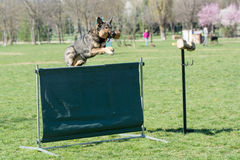 German Shepherd on agility competition, over the bar jump. Royalty Free Stock Photos