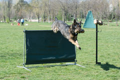 German Shepherd on agility competition, over the bar jump. Royalty Free Stock Photo