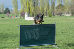 German Shepherd on agility competition, over the bar jump. Stock Photography