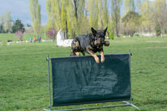 German Shepherd on agility competition, over the bar jump Royalty Free Stock Photography