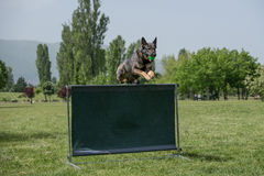 German Shepherd on agility competition, over the bar jump Royalty Free Stock Photo