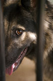 German shepherd behind the bars Stock Photo