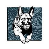 German shepherdbreaking glass. German shepherdbreaking glass . vector illustration Stock Photography