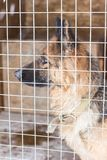 German shepherd in the cage in winter Royalty Free Stock Photography