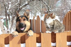 German shepherd and a cat. German shepherd near home on the work near homeand my cat Royalty Free Stock Photos