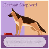 German shepherd colourful postcard Royalty Free Stock Images