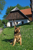 German shepherd dog. In front of old house Stock Photos