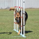 German Shepherd at a Dog Agility Trial Royalty Free Stock Photography