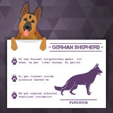 German shepherd dog banner Royalty Free Stock Photo