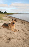 German Shepherd dog on beach Royalty Free Stock Photos