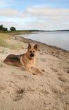 German Shepherd dog on beach Royalty Free Stock Photos