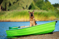 German shepherd dog in a boat. Long haired german shepherd dog outdoors Royalty Free Stock Photography