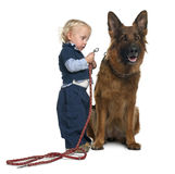 German shepherd dog with boy attaching leash royalty free stock image