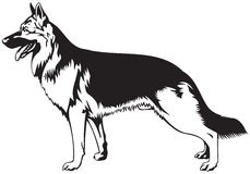 German Shepherd dog. Breed vector illustration from the dog show sign symbol set vector illustration