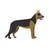 German shepherd dog breed Royalty Free Stock Images