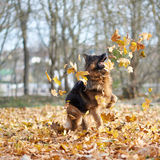 German shepherd dog composition Royalty Free Stock Photography
