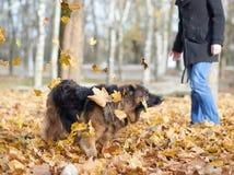 German shepherd dog composition Stock Photos