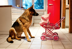 German shepherd dog and doll's pram Royalty Free Stock Images