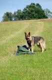 German shepherd dog, and man Royalty Free Stock Photography