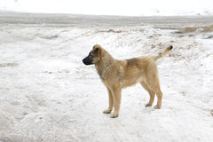 German shepherd dog is nearly lattice Royalty Free Stock Photo