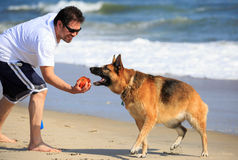 German Shepherd Dog Playing on Beach with Male Owner Stock Photos