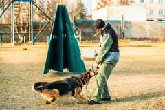 German Shepherd Dog training Stock Images