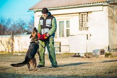 German Shepherd Dog training Stock Image