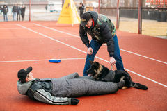 German shepherd dog training in Gomel Regional Stock Photo