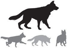 German shepherd dynamic vector silhouettes Stock Photography