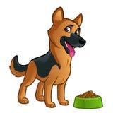 German Shepherd. Friendly dog of the German Shepherd breed Royalty Free Stock Image