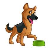 German Shepherd. Friendly dog of the German Shepherd breed Stock Images