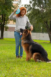 German shepherd with girl Stock Photos