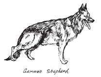 German Shepherd. Hand drawn doodle, sketch in pop art style, vector, German Shepherd Royalty Free Stock Photos