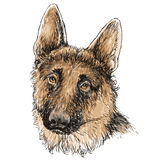 German Shepherd hand drawn  Stock Photos