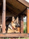 German shepherd in its kennel Royalty Free Stock Photo