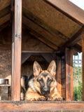 German shepherd in its kennel Stock Photo