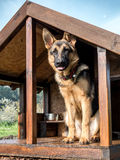 German shepherd in its kennel Royalty Free Stock Photography