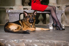 German shepherd next to women's legs Royalty Free Stock Photos
