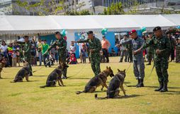German Shepherd obedience training royalty free stock image